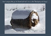 Winter Digital Photo Scene Posters - Snowy Hay Bale -  Thanksgiving Greeting Card Poster by Andrew Govan Dantzler