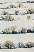 Snowy Landscape Print by Jeremy Woodhouse