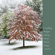 Winter Photos Photo Framed Prints - Snowy Maple with Buddha Quote Framed Print by Heidi Hermes