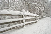 Snow Covered Fence Framed Prints - Snowy Morning Framed Print by Michael Peychich