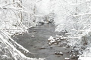 Gatlinburg Prints - Snowy Mountain Stream Print by Cindy Hicks