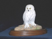 Bird Of Prey Art Paintings - Snowy Owl by David Tabor