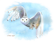 Birds Of Prey Paintings - Snowy Owl In Flight by Arline Wagner