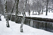 Park Scene Photo Prints - Snowy Park Print by Carlos Caetano