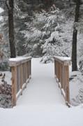 Snowy Path Print by Catherine Reusch  Daley