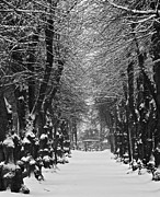 Winter Scene Metal Prints - Snowy Path Metal Print by Odd Jeppesen