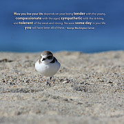 George Washington Carver Photos - Snowy Plover Message Print by TB Sojka