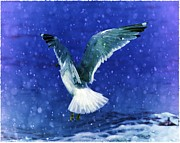 Photos Of Birds Framed Prints - Snowy Seagull Framed Print by Debra  Miller