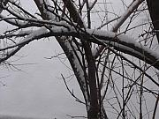 Anna Villarreal Garbis Metal Prints - Snowy Tree II Metal Print by Anna Villarreal Garbis