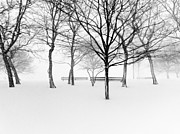 Park Bench Photos - Snowy Trees And Park Benches by Meera Lee Sethi