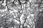 London Art - Snowy  Trees by Richard Newstead