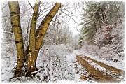 Snowy Watercolor Print by Debra and Dave Vanderlaan