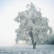 Square Tapestries Textiles - Snowy Winter Landscape by John Foxx