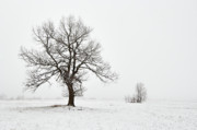 Foggy Day Posters - Snowy Winter Landscape With Tree Poster by Michal Boubin