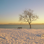 Fife Posters - Snowy Winter Sunset Over The River Forth Poster by David McAllister