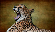 Cheetah Digital Art - So Tired by Heather Thorning