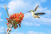 Floral Hummingbird Posters - Soar Poster by Saija  Lehtonen