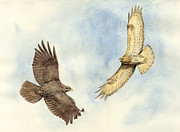 Soaring Painting Posters - Soaring Buzzards Poster by Chris Pendleton