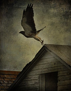 Hawk Photographs Prints - Soaring Hunger  Print by Jerry Cordeiro