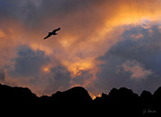 Norwegian Sunset Metal Prints - Soaring in the Midnight Sun Metal Print by Joe Bonita