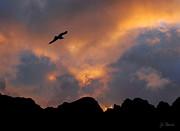 Soaring In The Midnight Sun Print by Joe Bonita