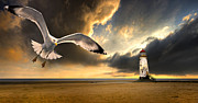 Flying Seagulls Framed Prints - Soaring Inshore Framed Print by Meirion Matthias