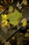 Fallen Leaf Posters - Soft Autumn Leaves on Wood Poster by M K  Miller