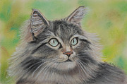 Furry Pastels Posters - Soft Kitty Poster by Julie Brugh Riffey