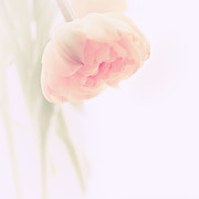 Fine Art Photo Prints - Soft Print by Kristin Kreet