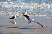 Gulf Of Mexico Photos - Soft Landing by Jan Amiss Photography