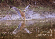 Sparkling Prints - Soft Landing on the Pond Print by Carol Groenen