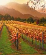 Napa Valley Vineyard Paintings - Soft Light Autumn by Patrick ORourke