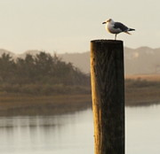 Pilings Prints - Soft Mornings Print by Karen Wiles