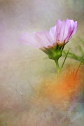 Soft Pastels Print by Darren Fisher