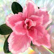 Soft Pink Azalea Print by Terence Davis