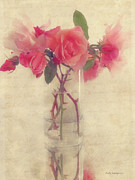 Flower Pictures Prints - Soft Rose Print by Kathy Jennings