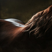 Equine Digital Art Posters - Soft Shapes Poster by Angel  Tarantella