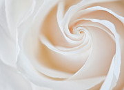 White Bloom Posters - Soft Swirls Poster by Susan Candelario