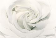 Soft White Print by Sven Pfeiffer