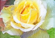 Photo Pastels Posters - Softly Blooming Rose Poster by AE Hansen