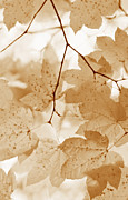 Brown Leaf Prints - Softness of Rusty Brown  Leaves Print by Jennie Marie Schell