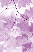 Leaf Art Posters - Softness of Violet Leaves Poster by Jennie Marie Schell