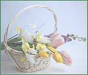 Basket Photos - Softness by This Wonderful Life