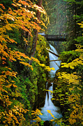 Fir Trees Photos - Sol Duc Falls in Autumn by Inge Johnsson