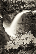 Sol Prints - Sol Duc Falls Print by Patrick M Lynch