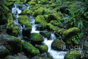 Olympic National Park Prints - Sol Duc Stream Print by Sandra Bronstein