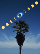 Solar Eclipse Prints - Solar Eclipse Sequence Print by Detlev Van Ravenswaay