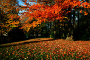 Autumn. Fall Colors - Solar Flair by Anthony Rego