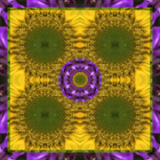 Sacred Geometry Posters - Solar Sage Poster by Bell And Todd