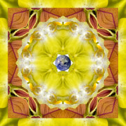 Mandala Photos - Solaria by Bell And Todd